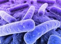 La prise en charge des nouveau-nés à terme à risque de sepsis bactérien d'apparition précoce